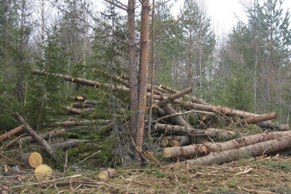 Услуга по переработке деревьев