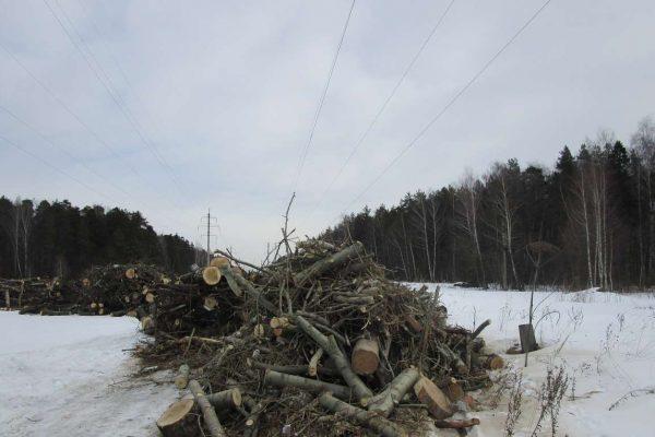Центр приёма деревьев